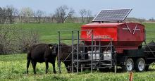 black cattle at automated feeder